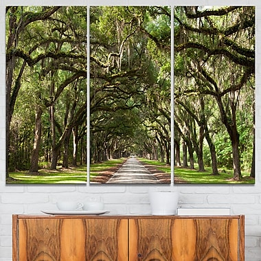 Live Oak Tunnel Photography Metal Wall Art