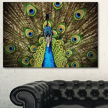 Grand Peacock Animal Photography Metal Wall Art, 28x12, (MT6535-28-12)