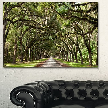 Live Oak Tunnel Photography Metal Wall Art, 28x12, (MT6553-28-12)