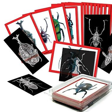 Roylco – Radiographies d'insectes et cartes de photos R5912, 72 pièces