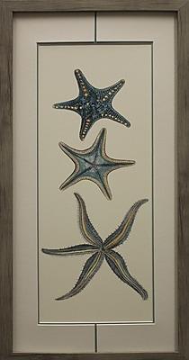 Star Creations Aquamarine Starfish I Framed Graphic Art Print on Paper