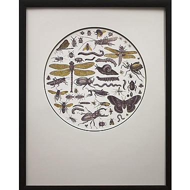 Star Creations Insect Circle I by Wild Apple Portfolio Framed Graphic Art