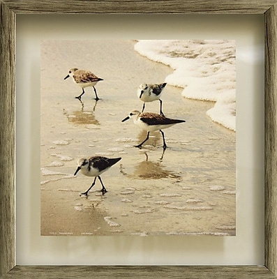 Star Creations Birds of the Shore II by Jairo Rodriguez Framed Photographic Print