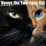 """Willow Creek Press 2017 Venus the Two-Faced Cat 12""""H x 12""""W (43814)"""