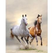 Cortesi Home Wild and Free Photographic Print