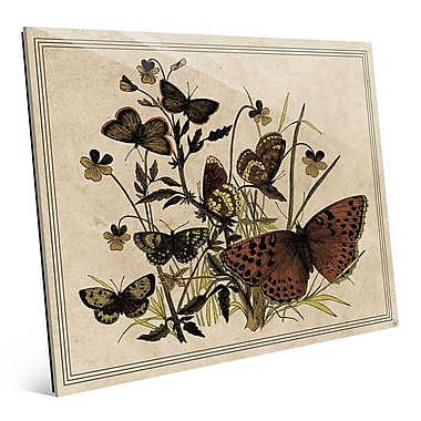 Click Wall Art '7 Butterfly and Clovers Drawing Paper' Graphic Art; 8'' H x 10'' W x 1'' D