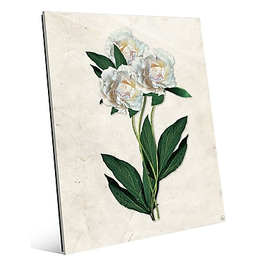 Click Wall Art 'White Carnations Paper' Graphic Art; 14'' H x 11'' W x 1'' D