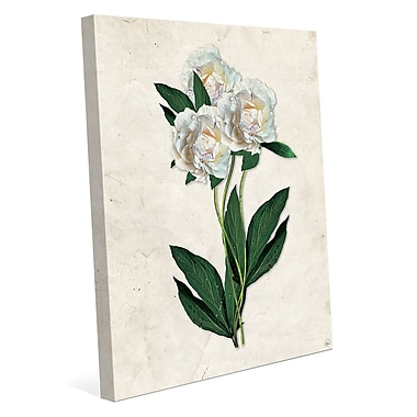Click Wall Art 'White Carnations Paper' Graphic Art on Wrapped Canvas; 14'' H x 11'' W x 1.5'' D