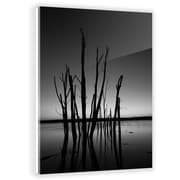 Two Palms Art Bazaar 'Dead Stalks' by SC Brown Photographic Print on Plaque; 45'' H x 30'' W x 1'' D