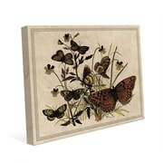 Click Wall Art '7 Butterfly and Clovers Drawing Paper' Graphic Art; 11'' H x 14'' W x 1'' D