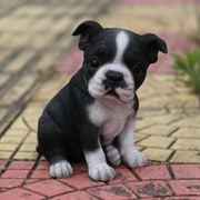 Hi-Line Gift Ltd. Sitting Boston Terrier Puppy Statue