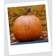 Craft-Tex Classic Pumpkin; Fall Harvest