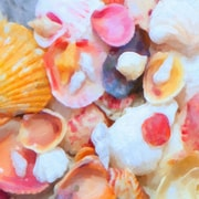 Graffitee Studios General Coastal 'Pink Painted Shells' Painting Print on Wrapped Canvas