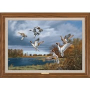WildWings Rapid Ascent - Pintails by David Maass Framed Painting Print