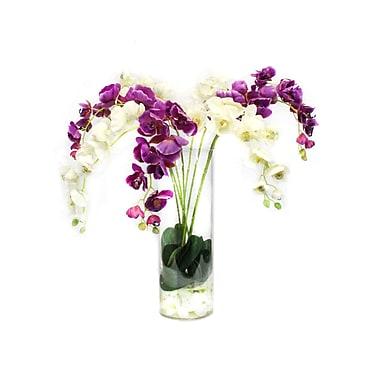 Dalmarko Designs Orchids in Glass