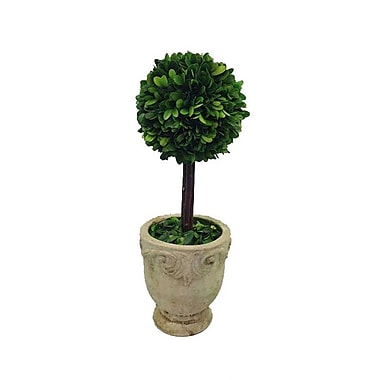 Flora Decor Preserved Boxwood Single Ball Topiary in Pot