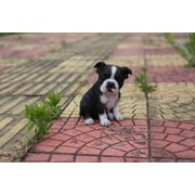 Hi-Line Gift – Statue Amis animaux, chiot Boston terrier