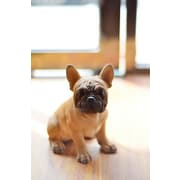 Hi-Line Gift Pet Pals, French Bulldog Puppy