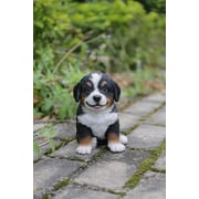 Hi-Line Gift – Amis animaux, chiot bouvier bernois