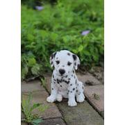 HI Line Gift – Amis animaux, Chiot dalmatien