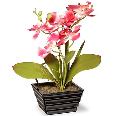 National Tree Co. Spring Orchids Flowers in Pot