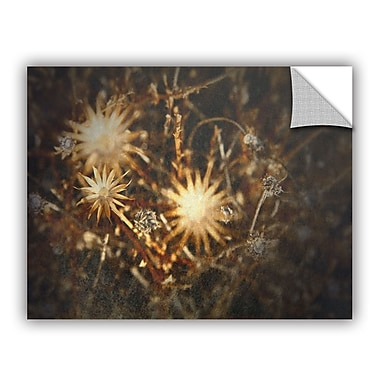 ArtWall ArtApeelz Falling Towards Stars by Mark Ross Photographic Print on Canvas