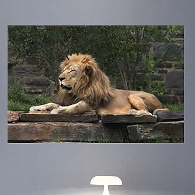 Wallhogs Lion Resting Glossy Wall Mural; 40'' H x 60'' W x 0.1'' D