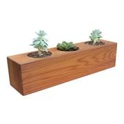 Gronomics Succulent Cedar Pot Planter