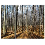 DesignArt 'Shade from Sun in Autumn Forest' 3 Piece Photographic Print on Canvas Set
