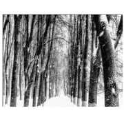 DesignArt 'Snowy Forest Black and White' 3 Piece Photographic Print on Canvas Set
