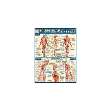 Barcharts Publishing Muscular System Workbook By Perez, Vince, Grade 12 [eBook]