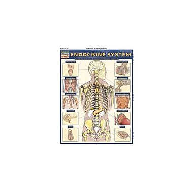 Barcharts Publishing Endocrine System Workbook By Northeast Editing, Grade 6 - Grade 12 [eBook]