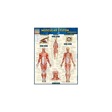 Barcharts Publishing Muscular System Advanced Workbook By Zaher, Dr. Aiman, Grade 6 - Grade 12 [eBook]