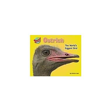 Bearport Publishing Ostrich: The World's Biggest Bird Workbook By Lunis, Natalie, Kindergarten - Grade 3 [eBook]