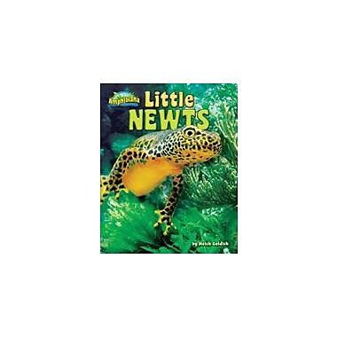 Bearport Publishing Little Newts Workbook By Goldish, Meish, Grade 1 - Grade 6 [eBook]