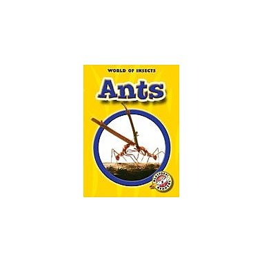 Bellwether Media Inc. Ants Workbook By Green, Jen, Kindergarten - Grade 3 [eBook]