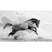 PicturePerfectInternational 'Flying Horse' Photographic Print on Wrapped Canvas