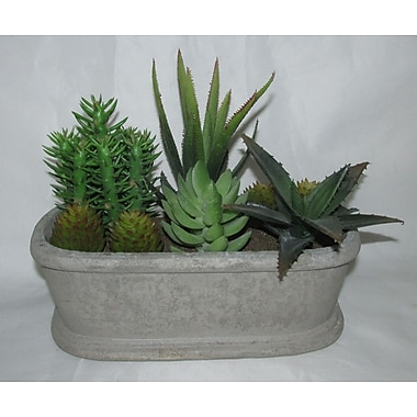 Jeco Inc. Succulent Plant in Planter