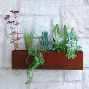 UrbanMettle Clarkesville Steel  Wall Planter; Rust