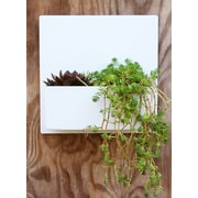 UrbanMettle Hip To Be Steel Wall Planter; White