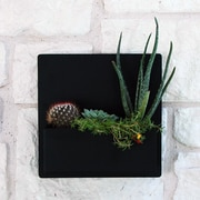 UrbanMettle Hip To Be Steel Wall Planter; Black