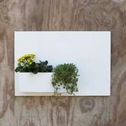 UrbanMettle Desert Rose Steel Wall Planter; White