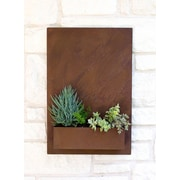 UrbanMettle Sucker for Succulents Steel Wall Planter; Rust