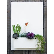 UrbanMettle Sucker for Succulents Steel Wall Planter; White