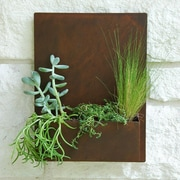 UrbanMettle Madness Steel Wall Planter; Rust