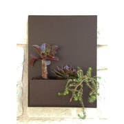 UrbanMettle Madness Steel Wall Planter; Brown