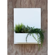 UrbanMettle Madness Steel Wall Planter; White