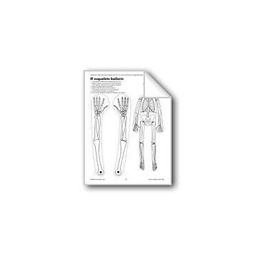 Evan-Moor Educational Publishers The Dancing Skeleton/El Esqueleto Bailarin Language Arts Workbook, Grade 1 - Grade 3 [eBook]