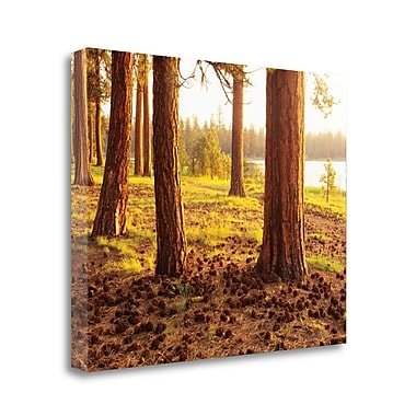 Tangletown Fine Art 'Pinecone Woods' Photographic Print on Canvas; 24'' H x 30'' W