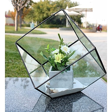 WGVInternational Heptahedron Tilted Cube Glass Terrarium; 11.5'' H x 12'' W x 12'' D